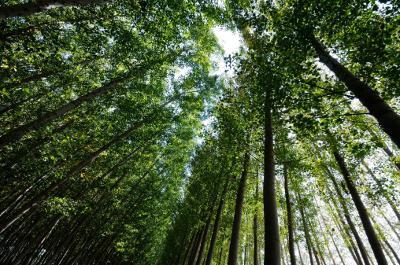 仰望森林中的树木